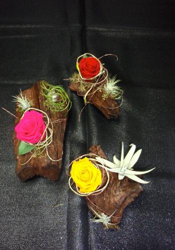 Rose éternelle et plante Épiphyte