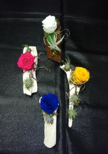 Rose éternelle et plante epyphite